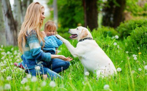 Et si posséder un animal domestique devenait un acteur anti-stress